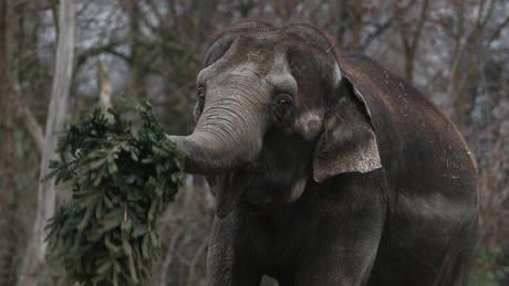 Επιχείρηση διάσωσης… ελεφαντίνας σε ζωολογικό κήπο της Γερμανίας (pics)