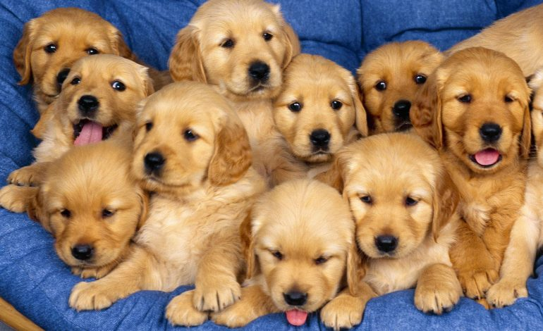 Puppy Day, σήμερα 2/12 στο εμπορικό κέντρο της Κηφισιάς.