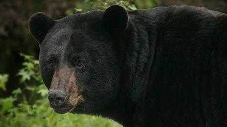 Καλιφόρνια: Τραυματισμένες αρκούδες θεραπεύτηκαν από δέρμα ψαριού (pics&vids)