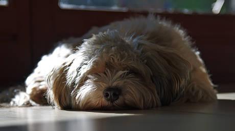 Σκυλίτσα καθόταν επί δύο εβδομάδες δίπλα στη νεκρή ιδιοκτήτριά της