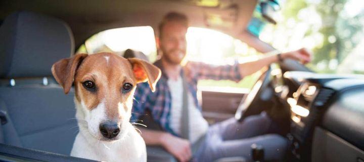 Συμβουλές για ασφαλή μετακίνηση του σκύλου σου με το αυτοκίνητο