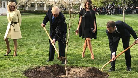 Λύθηκε το μυστήριο της εξαφάνισης του δέντρου που φύτεψαν Τραμπ-Μακρόν