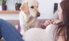 Πώς επηρεάζουν τα σκυλιά την εγκυμοσύνη μιας γυναίκας