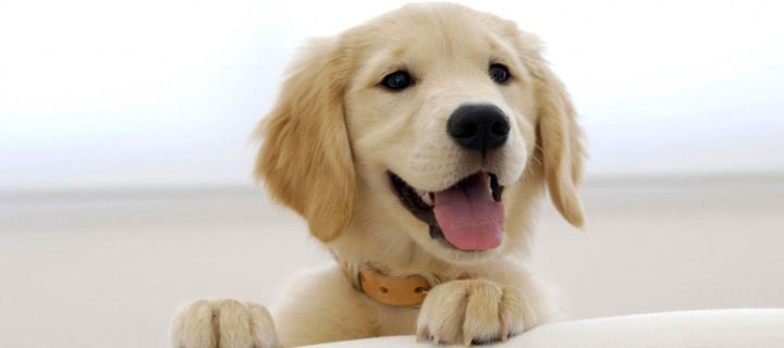 Τι είναι ο τυμπανισμός στον σκύλο