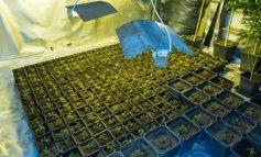 Φυτώρια κρυσταλλικής κάνναβης επτά βίλες της Αττικής - Στην Εκάλη το «στρατηγείο» των μαφιόζων