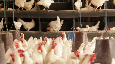 Κοτόπουλο Μπρες: Η ιστορία πίσω από το πιο ακριβό πουλερικό του κόσμου