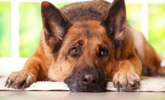 Πότε ο σκύλος έχει κατάθλιψη; Τα σημάδια και οι τρόποι αντιμετώπισης
