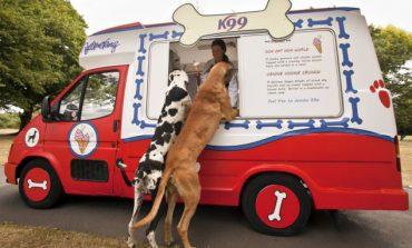 Κι ο σκύλος θέλει το...παγωτό του!
