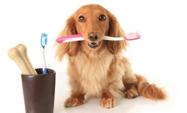 Ξέρεις πόσο συχνά πρέπει να βουρτσίζεις τα δόντια του σκύλου σου;