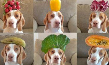 Φρούτα και λαχανικά για τον σκύλο σας - Ποια επιτρέπονται;