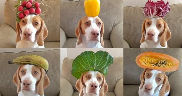 Φρούτα και λαχανικά για τον σκύλο σας – Ποια επιτρέπονται;