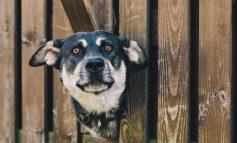Πώς να κάνεις τον σκύλο σου ευτυχισμένο ακόμα κι όταν λείπεις από το σπίτι