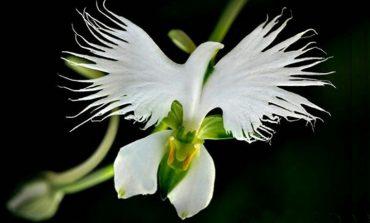 15 περίεργα λουλούδια που μοιάζουν με κάτι εντελώς διαφορετικό!