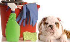 Σκύλος στο σπίτι! Tips για το τέλειο καθάρισμα