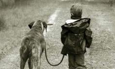 Σε ποια ηλικία μπορεί ένα παιδί να φροντίσει τον σκύλο ή τη γάτα;