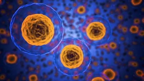 Γονιδιακή θεραπεία θεράπευσε την παράλυση σε πειραματόζωα