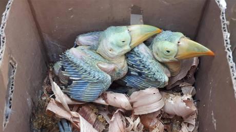 Πύθωνες, κροκόδειλοι και πουλιά κατασχέθηκαν σε επιχείρηση της Interpol (pics)