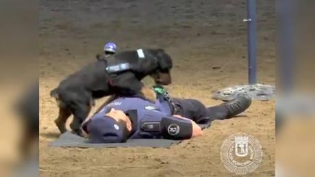 Σκύλος της αστυνομίας κάνει… καρδιακές μαλάξεις και γίνεται viral! (vid)