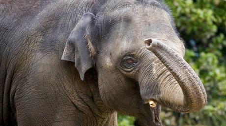 Το ξεχωριστό «ευχαριστώ» για τη διάσωση ενός μικρού ελέφαντα (vid)