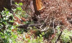 Οικολογικό έγκλημα στο Δάσος Φασίδερη στην Εκάλη Φωτορεπορτάζ.