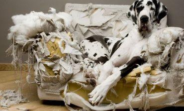 Οι δύο βασικοί λόγοι για τους οποίους ο σκύλος σου κάνει ζημιές στο σπίτι