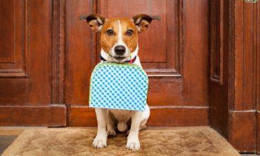 Τι πρέπει να προσέξεις, αν πρόκειται να μείνεις σε ξενοδοχείο με τον σκύλο σου