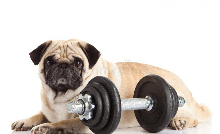 Τα σκυλιά μας κάνουν πιο ευτυχισμένους, πιο υγιείς και περισσότερο fit