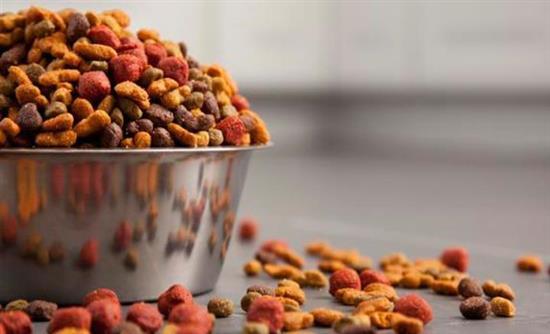 Τι πρέπει να ξέρεις για την τροφή του σκύλου σου