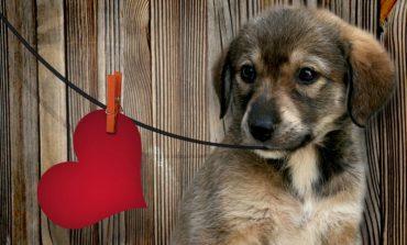 Έχετε σκύλο; Δεν κινδυνεύετε από καρδιακές παθήσεις