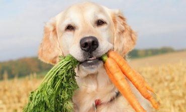 Μπορεί το σκυλί μου να γίνει χορτοφάγο;