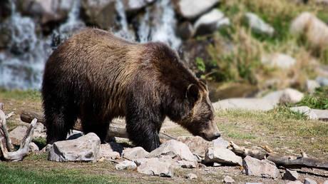 ΗΠΑ: Σπρέι πιπεριού έσωσε 10χρονο από επίθεση αρκούδας