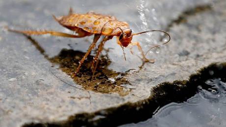 Κίνα: Κατσαρίδες στην αντιμετώπιση των απορριμμάτων της κουζίνας
