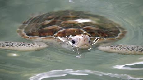 Μεξικό: 122 θαλάσσιες χελώνες εντοπίστηκαν νεκρές