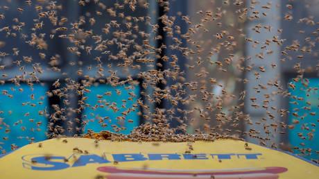 Νέα Υόρκη: «Επιδρομή» από… μέλισσες στην Times Square
