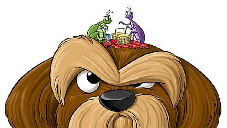 Φυσικές συνταγές για να προστατεύσεις τον σκύλο σου από τους ψύλλους
