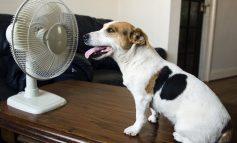Πώς θα αποφύγεις τη θερμοπληξία του σκύλου ή της γάτας σου