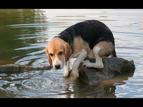Τι να κάνεις αν ο σκύλος σου φοβάται το νερό