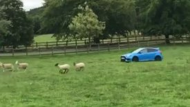 «Βοσκός» πάει τα πρόβατα στο μαντρί ντριφτάροντας με Ford Focus RS! (vid)