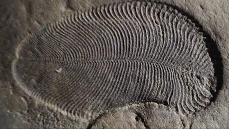 Ανακαλύφθηκαν ίχνη λίπους από το αρχαιότερο γνωστό ζώο που έζησε πριν από 558 εκατ. χρόνια (vid)