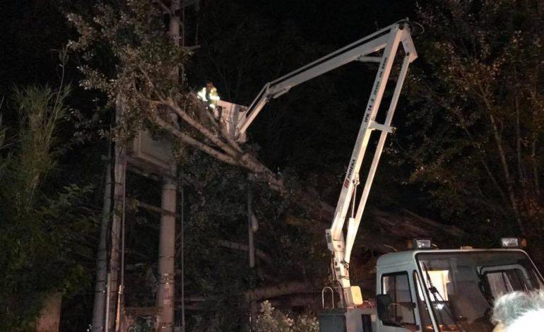 Σφοδροί άνεμοι ξερίζωσαν τεράστιο δέντρο έξω από τον σταθμό του ΗΣΑΠ στην Κηφισιά