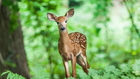 ΗΠΑ: Προειδοποίηση στους κυνηγούς για κρούσματα επικίνδυνης ασθένειας σε ελάφια (pic)