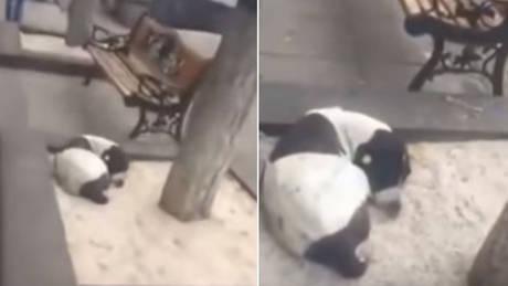Η συγκινητική στιγμή που ένας 62χρονος βρίσκει τον χαμένο σκύλο του μετά από 3 χρόνια