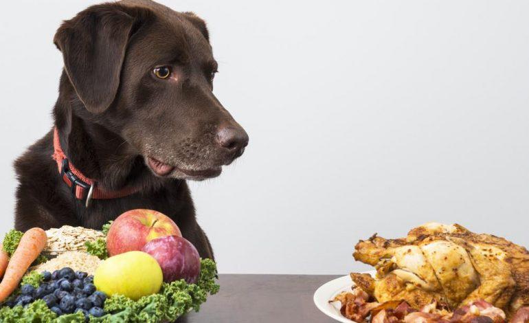 Πόσο πρέπει να ταΐζω το σκύλο και τη γάτα μου;
