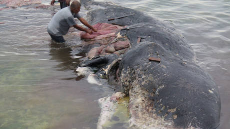 Ινδονησία: Νεκρή φάλαινα είχε στο στομάχι της 6 κιλά πλαστικών αποβλήτων (pics)