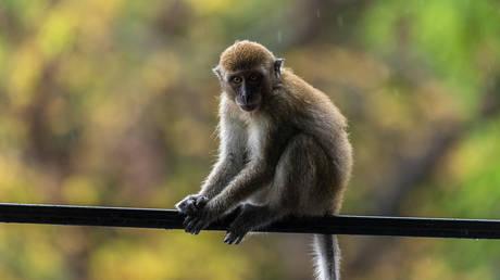 Φρίκη στην Ινδία: Μωρό 12 ημερών πέθανε μετά από επίθεση μαϊμούς