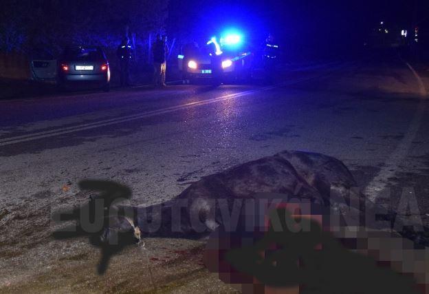 Σφοδρή σύγκρουση αυτοκινήτου με άλογο έξω από το Καρπενήσι (εικόνες)