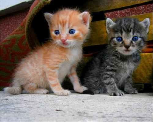 7 πράγματα που πρέπει να γνωρίζεις αν βρήκες ένα εγκαταλελειμμένο γατάκι