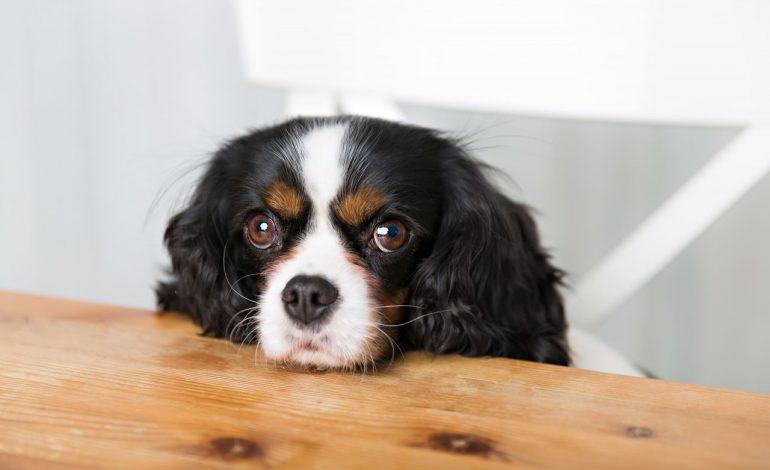 Πώς θα καταλάβεις ότι ο σκύλος σου πεινάει;
