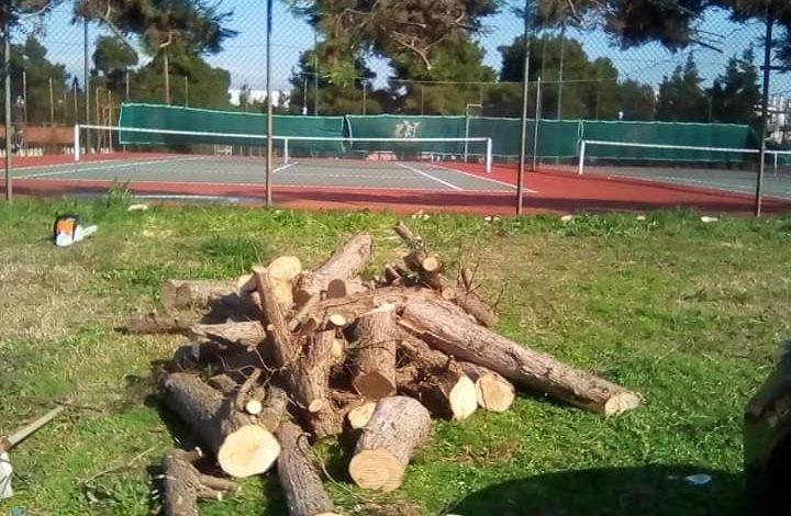 Προκλητική ενέργεια. Έκοψαν 30 δέντρα στη Νέα Ερυθραία.