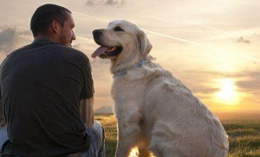 Ανθρώπινες συνήθειες που δεν αρέσουν στα σκυλιά
